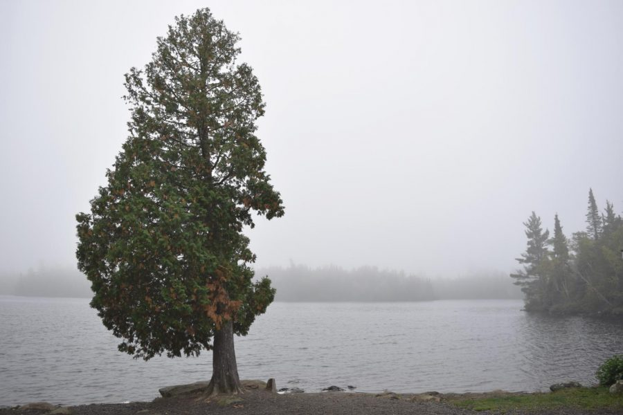 Northern+Pine