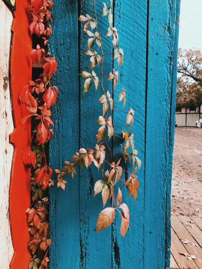 Color by Julia Hegedus '18