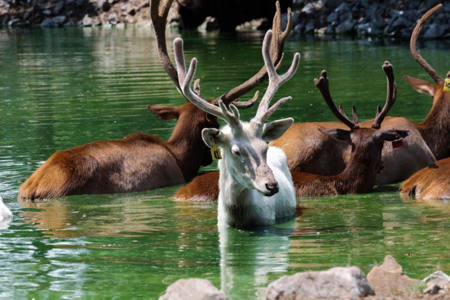 Reindeer by Sydney Wilharm '20